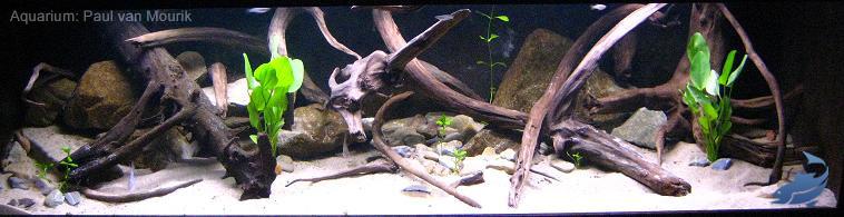 aquarium-kienhout