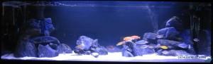 aquarium-michel-gelens
