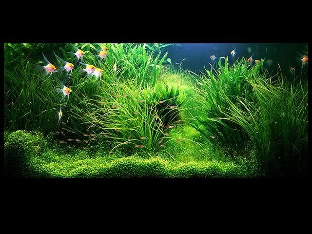 takashiamano-aquarium-4