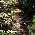 aziatische-zwartwater-biotoop