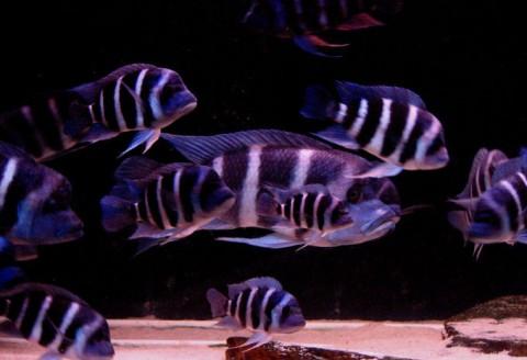 aquarium-laurette12-2