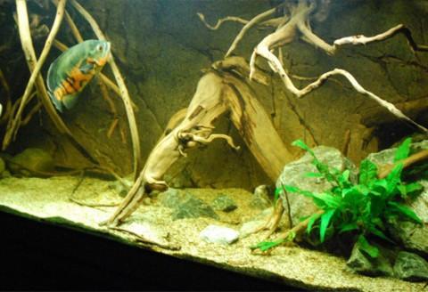 aquarium-niels-nuijten