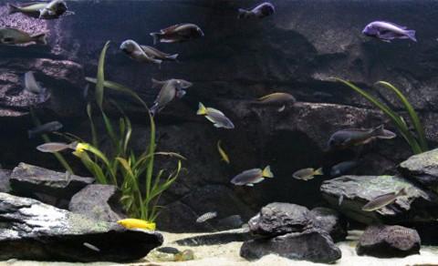 aquarium-ton-sakes