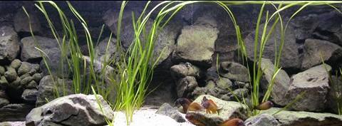 aquarium3-art-landman