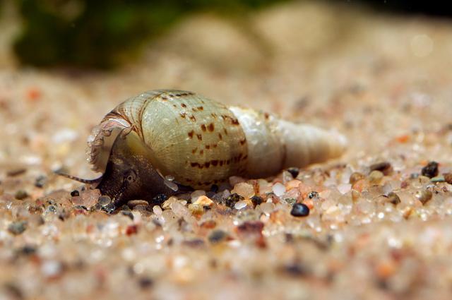 Slakken in ons aquarium   Cichlidenkwekers