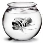 het-aquarium