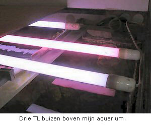 Aquarium verlichting - Cichlidenkwekers