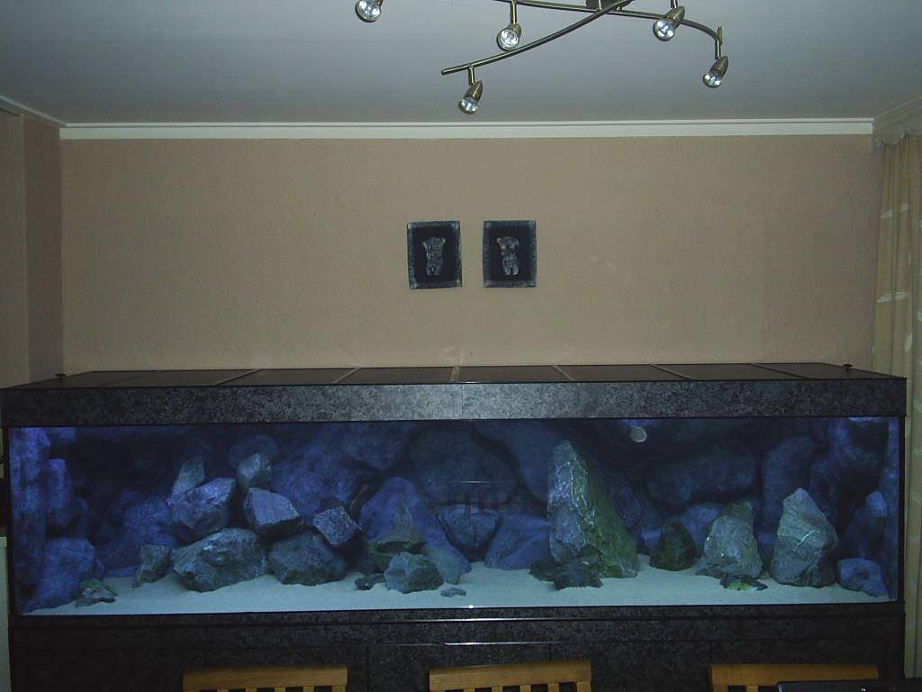 Project, zelf  en opbouw Aquarium   Cichlidenkwekers