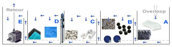 bioloog schema