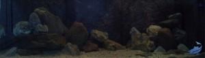 150cm aquarium