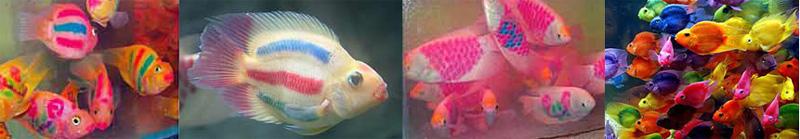 fluorescerendevissen
