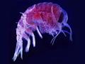 micro-plankton