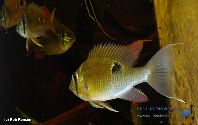 biotodoma-cupido-santarem