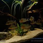 groeps vis