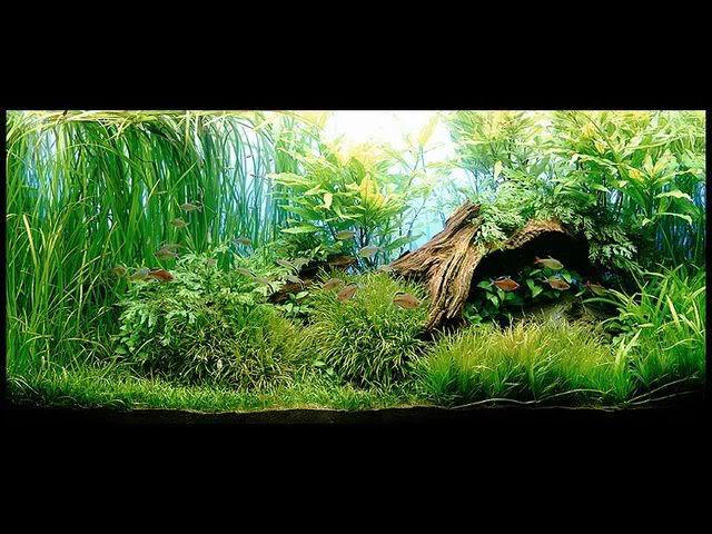 takashiamano-aquarium-3