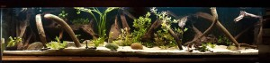 aquarium rijping