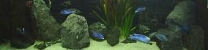 2meter aquarium