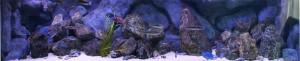 3meter aquarium