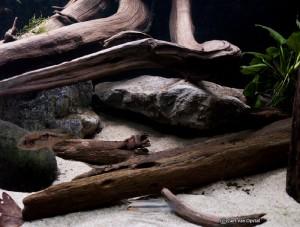 kienhout