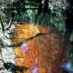 blackwater biotoop