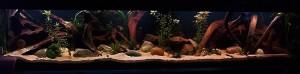 zuid-amerikaans aquarium