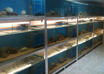 jmbcichlids aquarium