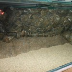 hoofddorp-cichlids-aqaurium-6a