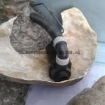 hoofddorp-cichlids-aqaurium-8c