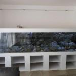 hoofddorp-cichlids-aqaurium-9b