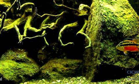 aquarium-hj-van-scherpenzeel