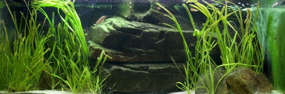 aquarium-j-van-antwerpen