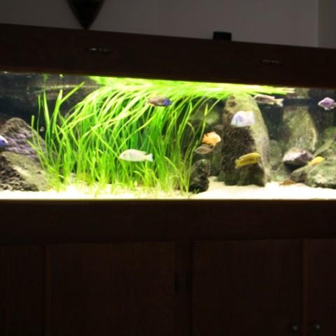 aquarium-john-geven1