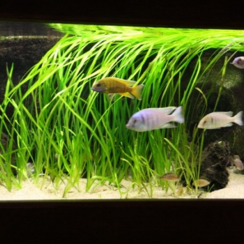aquarium-john-geven2