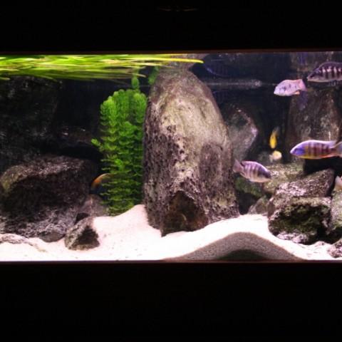 aquarium-john-geven3