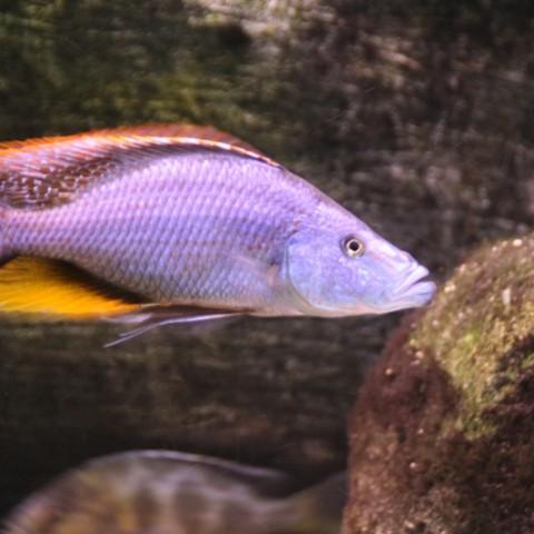 aquarium-john-geven5