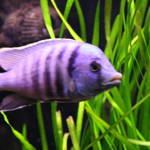 aquarium-john-geven6