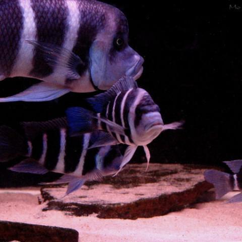 aquarium-laurette11-2