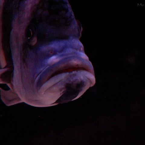 aquarium-laurette5-2