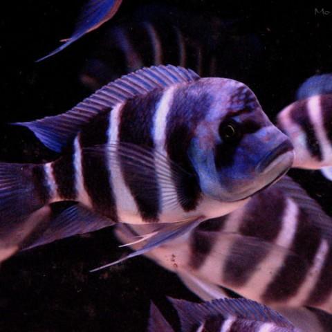 aquarium-laurette6-2