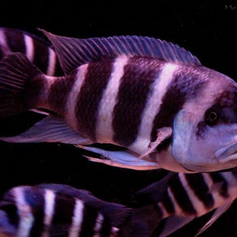 aquarium-laurette8-2