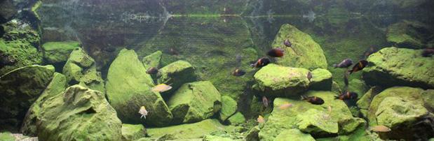 aquarium1-art-landman