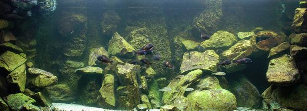 aquarium2-art-landman