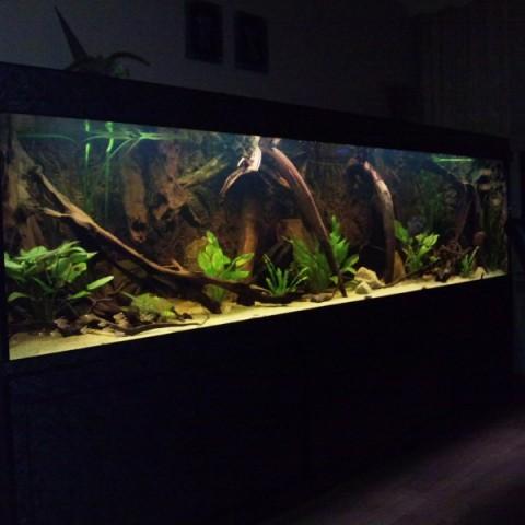 Aquarium R. Verkennis