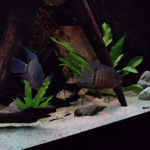 rene-verkennis-aquarium2