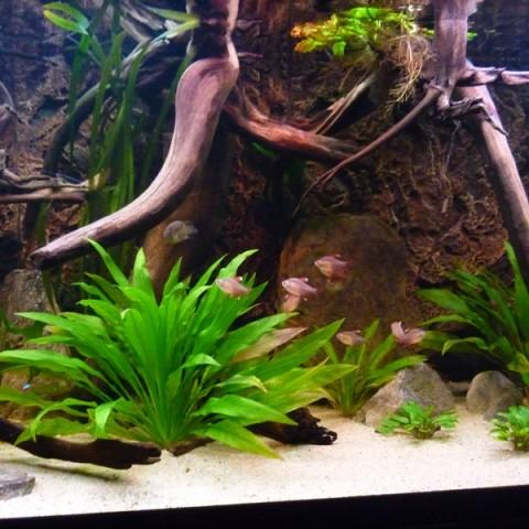 rene-verkennis-aquarium3