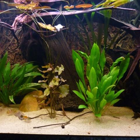 rene-verkennis-aquarium4