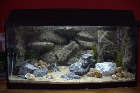 koos-bloemen-tanganyika-aquarium1