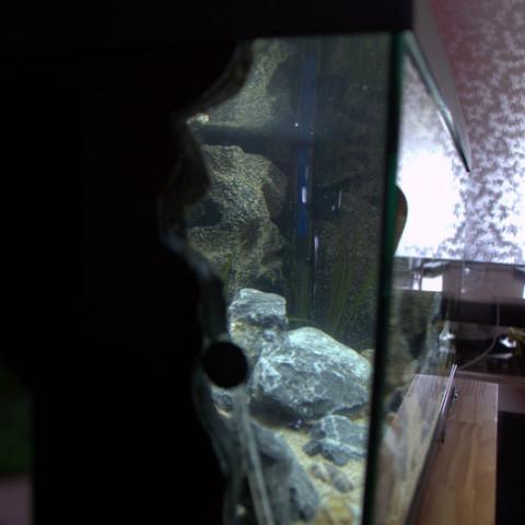 koos-bloemen-tanganyika-aquarium3