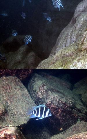 aquarium-inrichting
