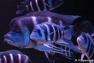 lichaams-taal-vissen